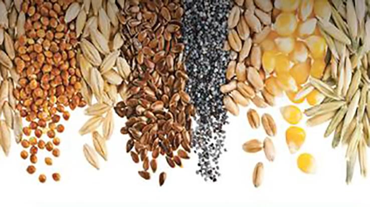 The Cultural Politics of Seeds<br />PI: